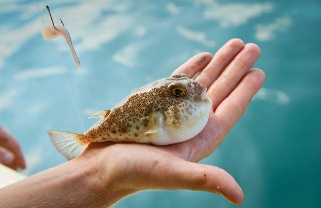 fugu food lifestyle 2