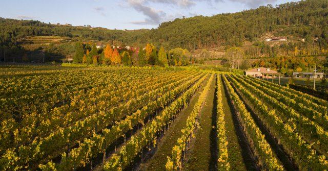 vinho-verde.andre-amaral-foodlifestyle-0
