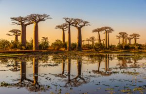 baobab-food-lifestyle