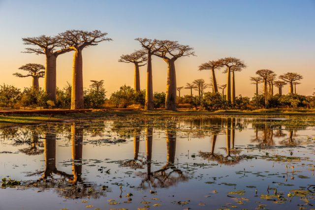 baobab-food-lifestyle