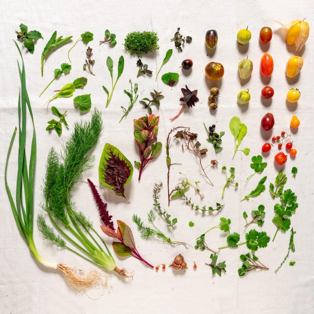 Composizione Manna Organic food lifestyle